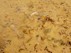 Déchets plastiques dans le désert