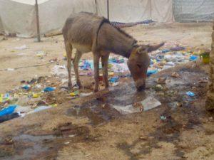Dans un village du désert mauritanien, hiver 2019